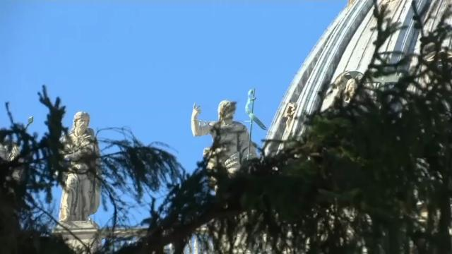 Christmas Tree Placed in St Peter's Square