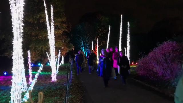 Over 1 Million Lights Transform Royal UK Garden