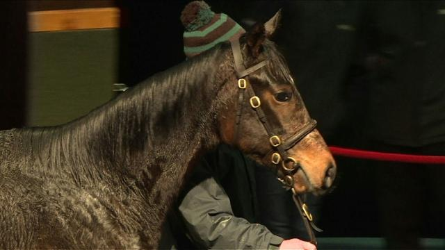 Ireland's racehorse industry voices Brexit concern