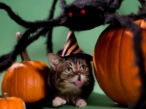 Kitten blazes the trail for special-needs pets