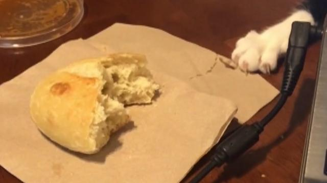Cat slyly steals owner's food