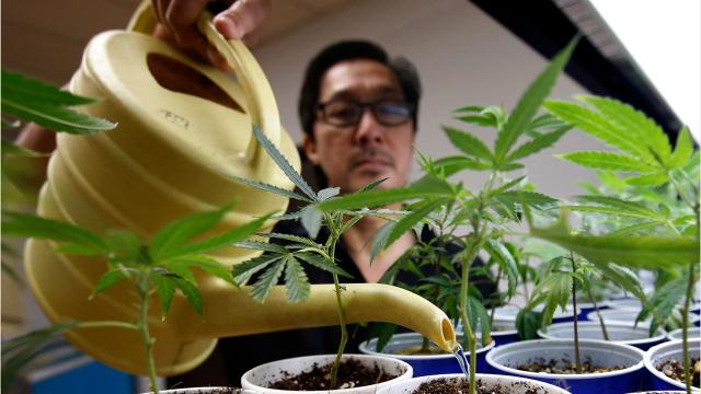 Here's what Calif.'s legalization of marijuana means for consumers