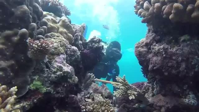 Coral reefs under siege: Frequency of bleaching has increased almost fivefold since the '80s