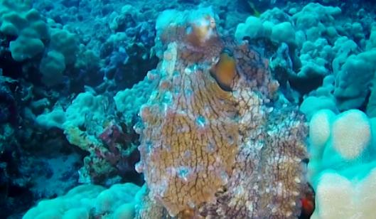 Watch this octopus change colors right before your eyes