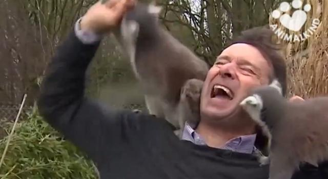 Reporter's lemur shoot went horribly, hilariously wrong