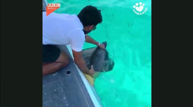 Sea turtle rescued from floating trash