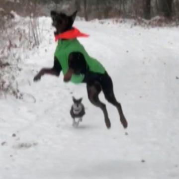 Dog thinks snow is treats falling from the sky