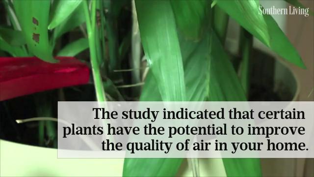 The hidden health benefits of indoor plants