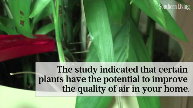 The hidden health benefits of indoor plants