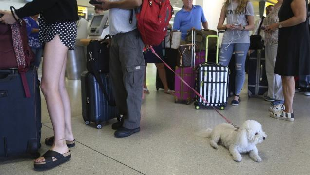 Delta Air tightens requirements for onboard emotional support animals