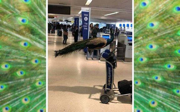 Do's (and don'ts) of flying with an emotional support animal