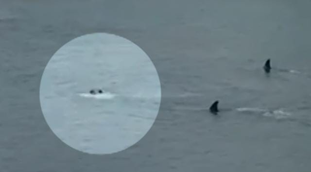 Two kids were swimming near a New Zealand island when a pair of orcas came way too close for comfort.