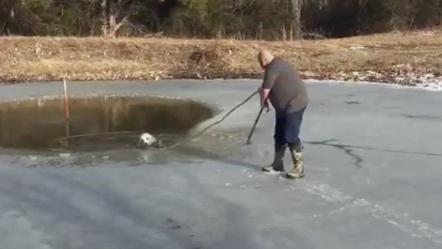 Pastor eases onto icy pond to rescue dog