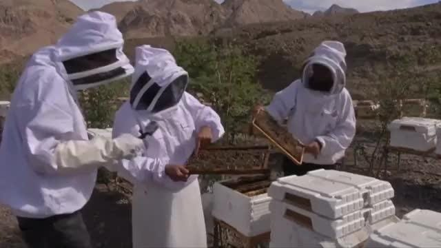 Amid a world-wide crisis in the bee industry, two companies have formed a joint venture to produce honey sustainably in the UAE. Edward Baran has more. Video provided by Reuters