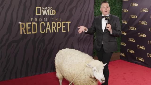 Nat Geo WILD is hosting its own red carpet show Oscars night, with animals as the stars.