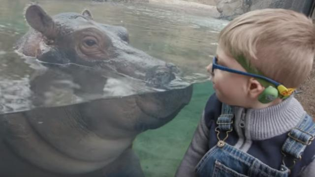 Little boy finds unique friendship with baby hippo