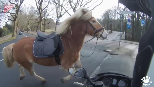 Runaway horse takes owner on wild chase