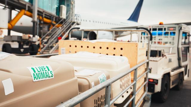 Dot Animal Deaths On Flights Focus On Cargo Not Cabin