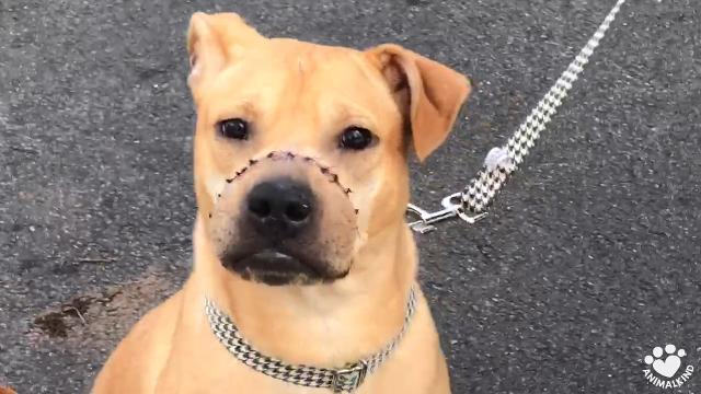 Puppy with horrific injury to snout rescued from abuse