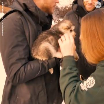 American freestyle skier Gus Kenworthy reunited with the dog he rescued from a South Korean dog meat farm.