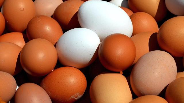 200 million eggs recalled for fear of salmonella