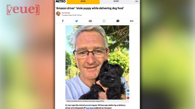 Puppy Stolen By Amazon Delivery Driver Returned After Bezos Emailed