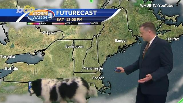 Surprising moment dog casually walks into weatherman's live forecast