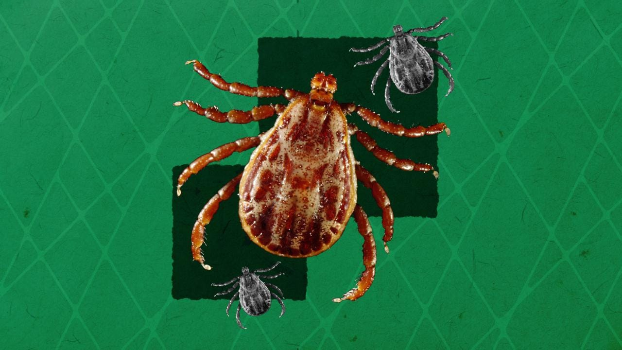 How many ticks live and where exactly do they live