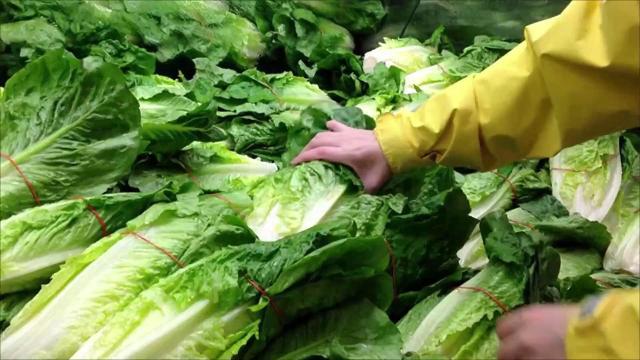 Food recalls up 10 percent since 2013 as foodborne illnesses kill 3,000 Americans a year