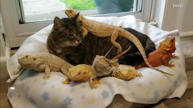This cat has some very unusual friends, including Lenny ...