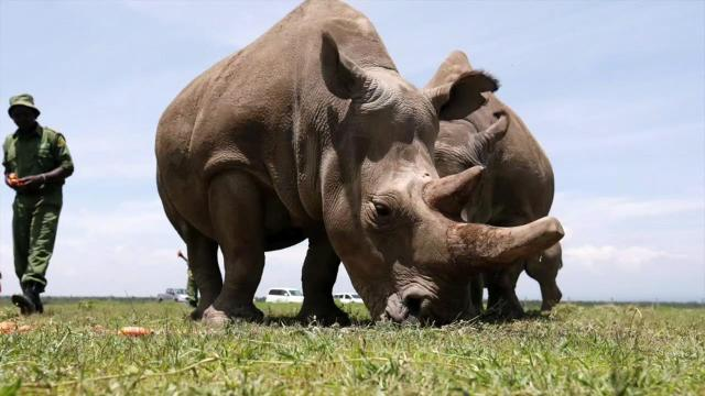 Extinct species: These animals were lost forever in 2018