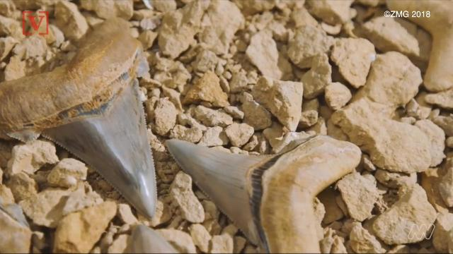 An amateur fossil hunter and teacher in Australia found the teeth of an ancient mega shark in a boulder.