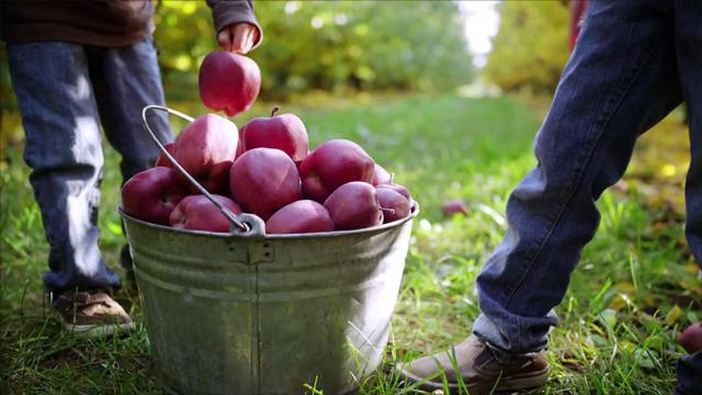 It's almost apple season, so keep an eye out for these new varietals.