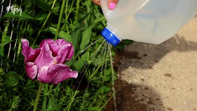 5 clever hacks for gardening on a budget