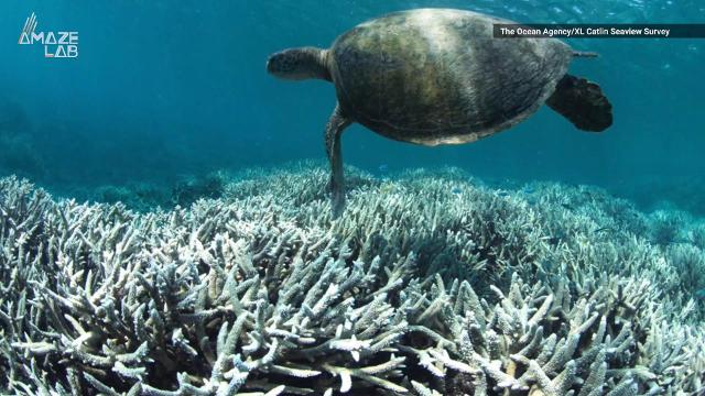 'Dead corals don't make babies': Great Barrier Reef can't heal after global warming damage