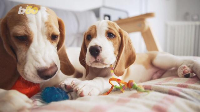 Your dog gets you! A new study says they do have a basic understanding of the words they've been taught. Buzz60's Maria Mercedes Galuppo has more.