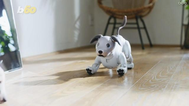 Could these lifelike robot pets replace our cuddly companions?