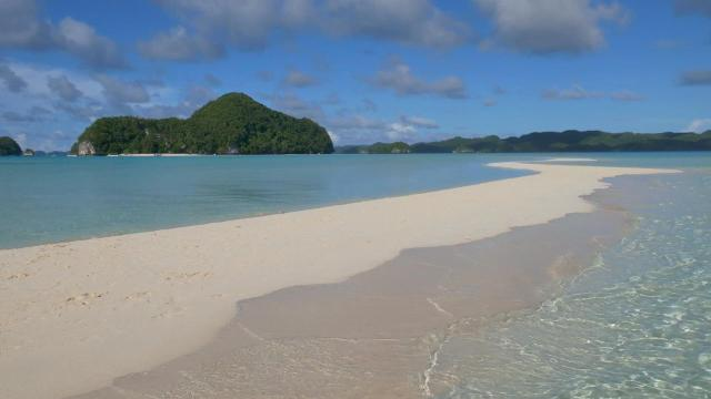 Palau bans certain sunscreens to protect coral reefs