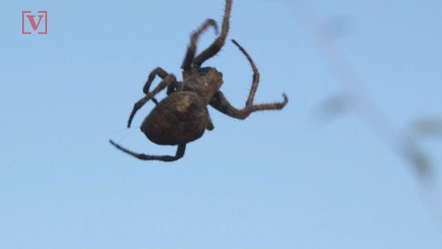 Scientists uncover potential remedy for arachnophobia