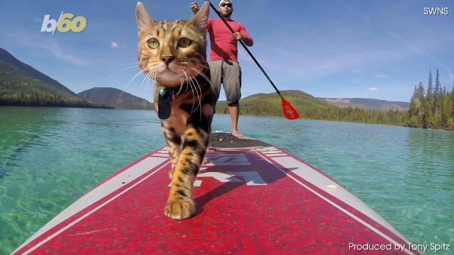 Logan may be the sickest cat around, check him out on the lake.Buzz60's Tony Spitz has the details.