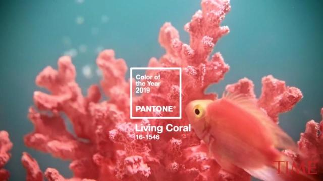 Pantone Hopes Living Coral 2019 S Color Of The Year Gives A Big Hug