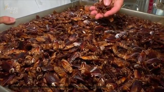 Chinese city Jinan is using billions of cockroaches to help eliminate 50 tons of food waste daily.