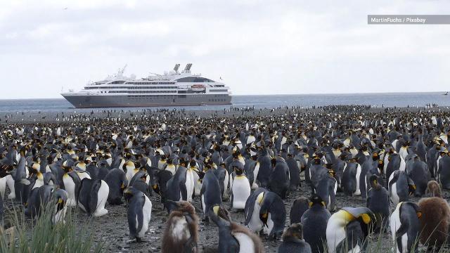 cd5b170d87db World Tourists may be passing human diseases to Antarctic penguins
