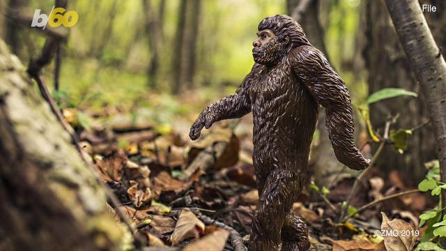 Travel Channel: Looking for Bigfoot? Ohio is 'teeming' with sightings