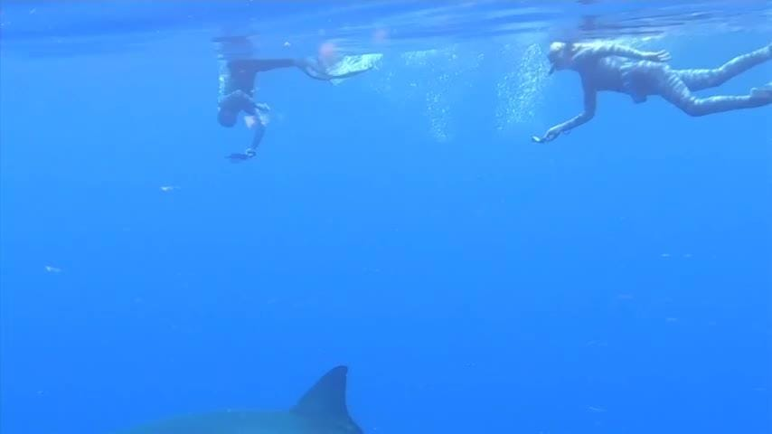 Shark researchers close encounter with great white