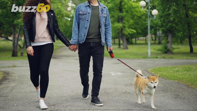 If you're dating someone and they have a dog, well you could be in for a different set of dating standards, according to a new poll on behalf of dog walking app Wag.