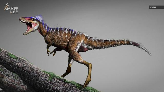 Scientists have discovered a mini ancestor of the of T. rex in modern day Utah.