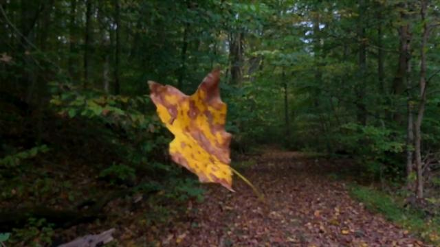 Seen while on a hike at Mount St. Francis in Floyds Knobs, this leaf seemed to dance in midair after being caught on a nearly invisible piece of spider web strand. Special effects credit to Mother Nature.