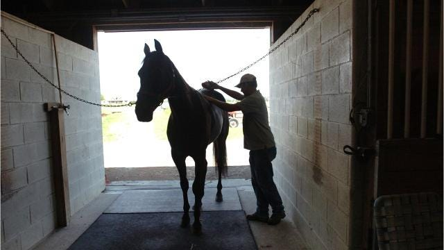 The West Nile virus has been detected in an 11-year-old Quarter horse mare in Kent County, according to a news release. The horse was euthanized Aug. 9. 8/16/17