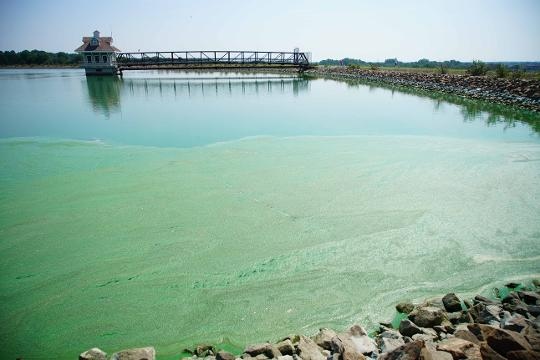A blue-green algae has grown to unsafe levels in the Newark Reservoir canceling this coming weekends aquatic leg of a Triathlon held at the reservoir.